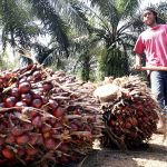 Malaysia set to outpace Indonesian palm oil exports to India