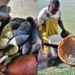 Teknologi Optimalkan Budidaya Ikan, Anugerah bagi Petani