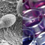 Molekul Memperkuat Sistem Kekebalan, Peneliti Kembangkan Pendekatan Terapeutik